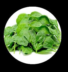 FibreFirst - Suplemen Serat Premium Detox HarianFibreFirst merupakan suplemen kaya serat dan nutrisi dengan ekstrak sayuran dan buah. Menjaga kesehatan saluran pencernaan dan detoksifikasi tubuh kamu. Minuman serat terbaik sebagai suplemen kesehatan.
